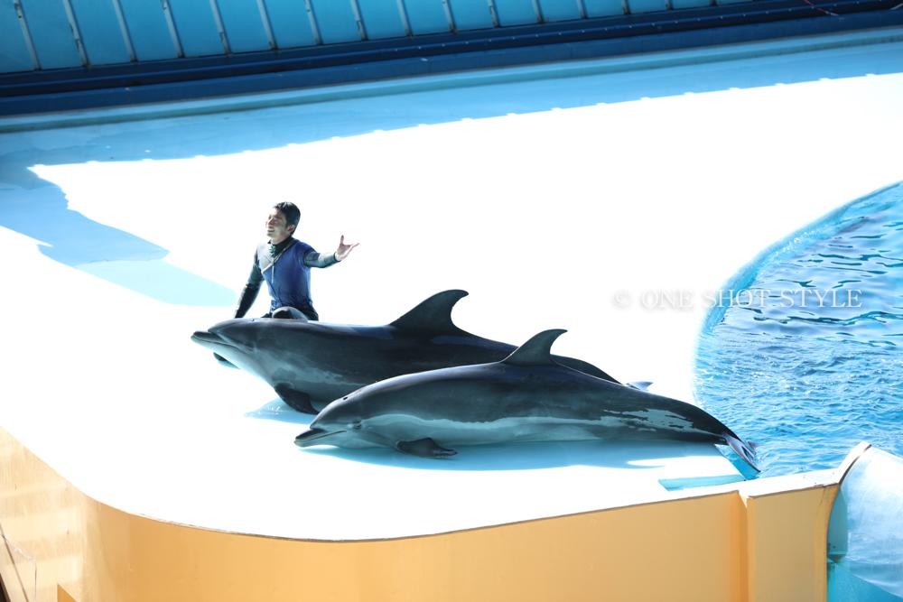 円月島 和歌山 円月島 アドベンチャーワールド サンセット パンダ