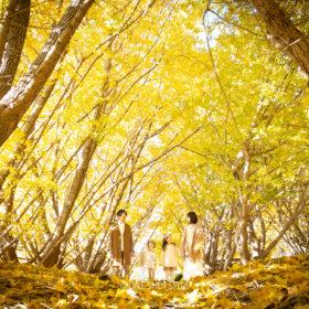 愛知 名古屋 出張撮影 家族写真 銀杏 紅葉 秋 ロケーションフォト
